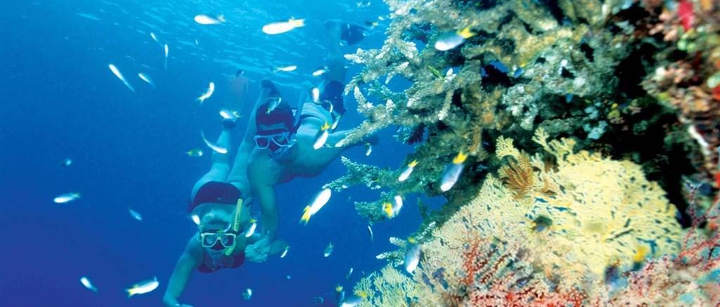 Hamilton Island Snorkeling Tours