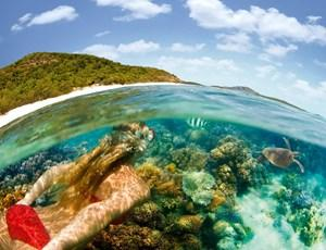 Snorkelling with turtles near Hamilton Island