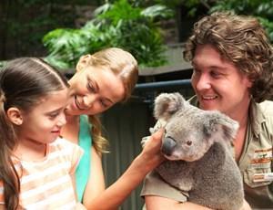 Koala at Wild Life on Hamilton Island