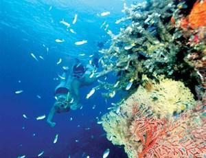 Snorkelling near the Great Barrier Reef