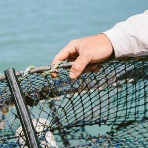 Hamilton Island fisherman holding a crab net