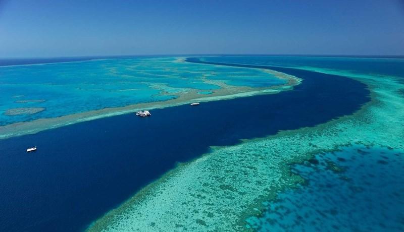 Cruise Whitsunday's Reef World