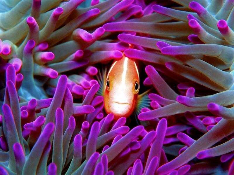 Cruise Whitsundays Great Barrier Reef Adventures | Hamilton