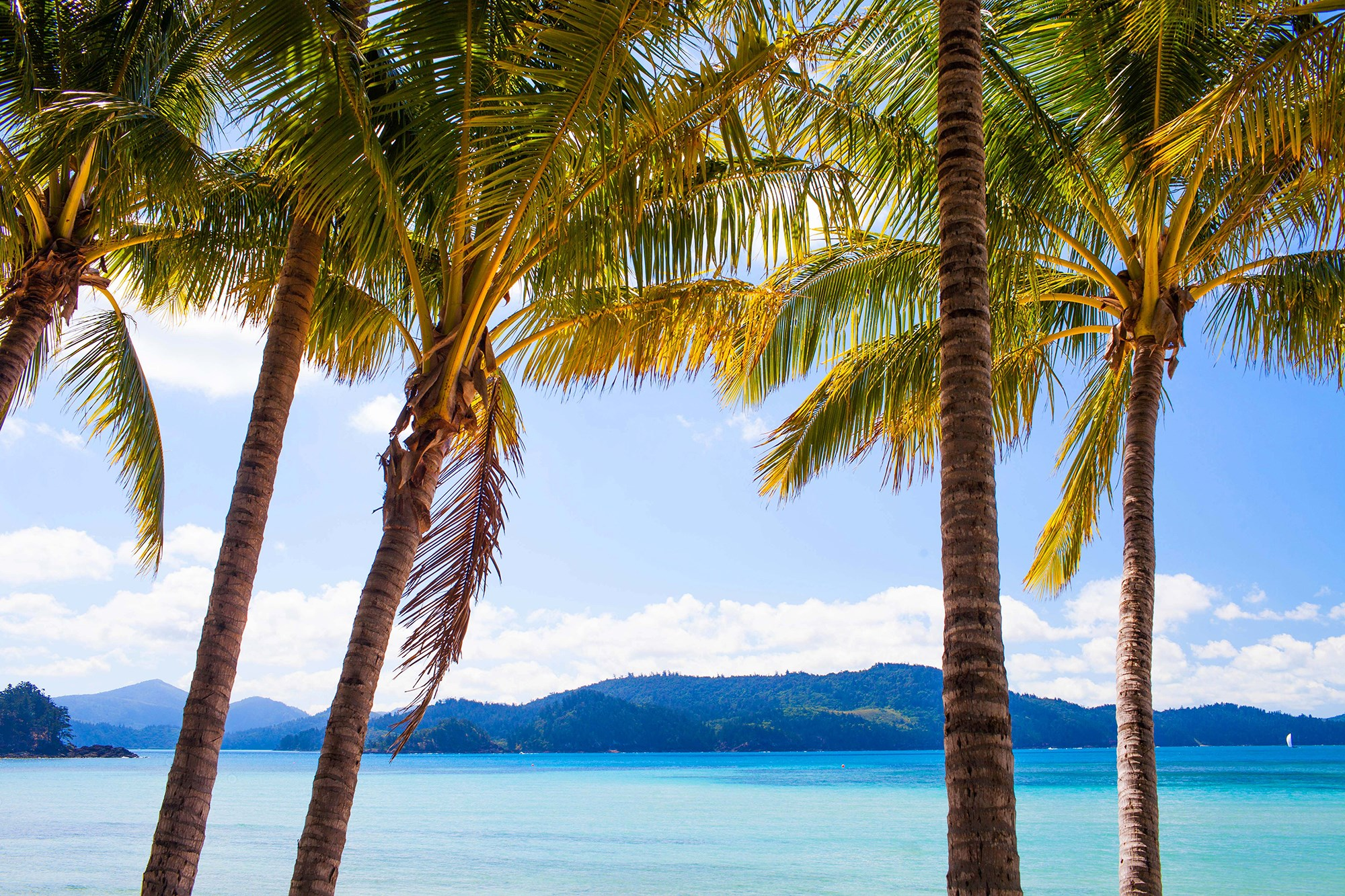 Looking for a Great Barrier Reef resort? Or Queensland resort deals? Hamilton Island offers a perfect getaway.