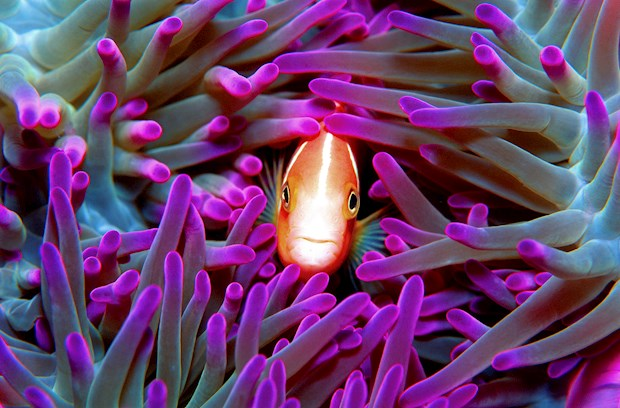 No Great Barrier Reef resort holiday would be complete without a trip to the Great Barrier Reef itself. Cruise Whitsundays offers several Great Barrier Reef Deals for families.
