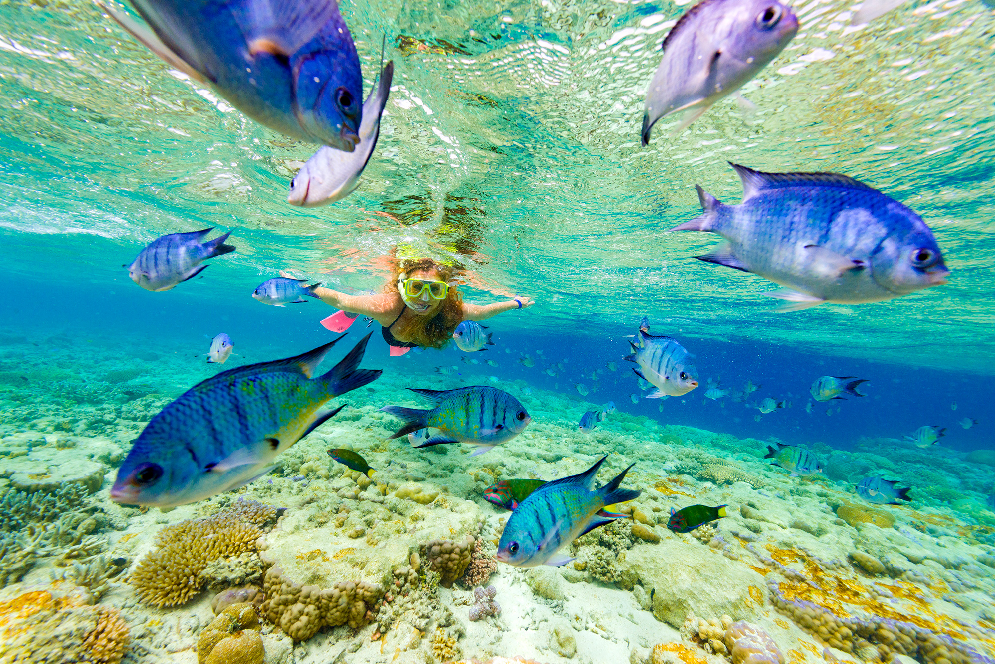 Full Day Snorkelling Barrier Reef From Hamilton Island
