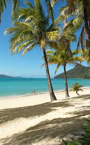 how to go to hamilton island from airlei beach