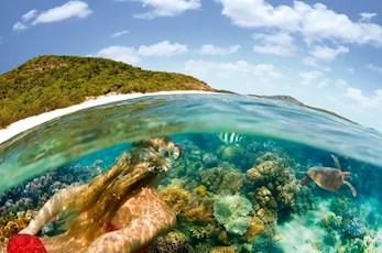 Encounter marine life snorkeling the Great Barrier Reef - Hamilton Island vacation