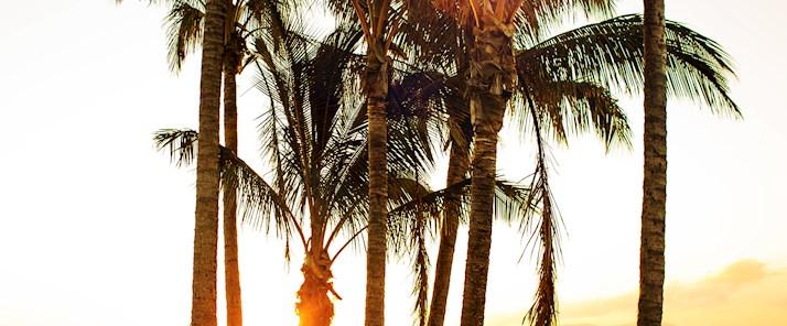 One tree Hill palm tree view at Hamilton Island