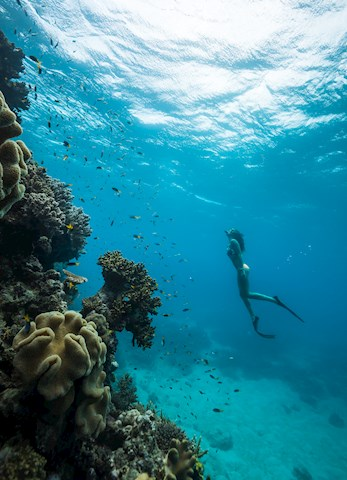 Dive the Great Barrier Reef  - family holiday deals Hamilton Island