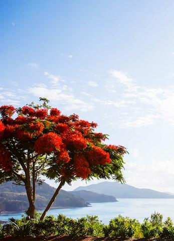 Hamilton Island babymoon - One Tree Hill amazing views