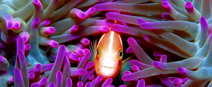 See the amazing colours of the Great Barrier Reef - family holiday deals Hamilton Island